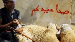 Aid El Adha: le surdosage en complément alimentaire derrière la putréfaction de la viande de