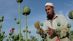 La production d'opium difficile à freiner en