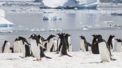 Στην Ανταρκτική θα δημιουργηθεί το μεγαλύτερο θαλάσσιο πάρκο στον