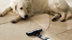 Was wirklich hinter der Feindschaft zwischen Hunden und Staubsaugern