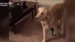 Ce chien voit son jouet préféré prendre vie pour Halloween, et c'est