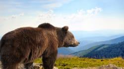 Αρκούδες έκαναν βόλτα στην πόλη της Καστοριάς. Μεγάλη κινητοποίηση της