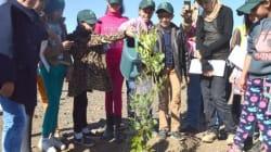 Le Maroc plante 1 million d'arbres en une seule