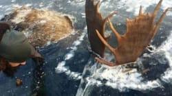 Ένας άνδρας ανακάλυψε δύο παγωμένα ελάφια σε ποτάμι στην