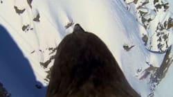 Το ΒΒC αποκάλυψε όλη την αλήθεια για το συγκλονιστικό βίντεο με τον «άγριο» αετό που πετούσε πάνω από τις