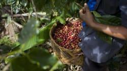 Fairtrade ist nicht