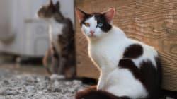 Γυναίκα στην Αυστραλία εγκατέλειψε τις 14 γάτες της και αυτές άρχισαν να τρώνε η μία την άλλη. Επιβίωσε μόνο