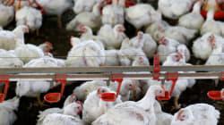 Εστία της γρίπης των πτηνών Η5Ν8 εντοπίστηκε στη Σουηδία. Θα σφαγιαστούν 200.000