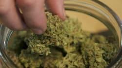 미국에는 마리화나를 저가에 판매하는 '그린 프라이데이'도