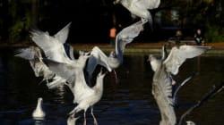 Lac d'Ichkeul: Des cas de grippe aviaire détectés chez des oiseaux