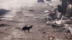 Παραβίαση της νέας εκεχειρίας στο Χαλέπι καταγγέλλουν οι