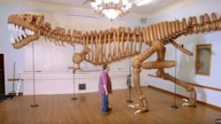 거대하지만 위협적이지는 않은 공룡이