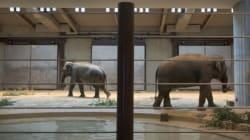 «Ο ζωολογικός κήπος του θανάτου». Περισσότερα από 50 ζώα σκοτώθηκαν «κατά λάθος» σε 10