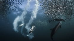 2016 내셔널 지오그래픽 '최고의 자연