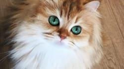 2016년을 빛낸 '최고의 고양이