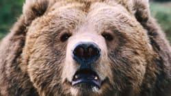 파리동물원에서 코끼리와 곰은 전시하지 않는