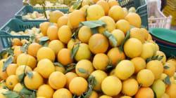 Quand le journal de France 2 parle de la surproduction d'oranges en