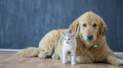 Animal Lovers: We Need Your