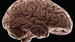 Μίνι-εγκέφαλο στην ωoθήκη της έκρυβε