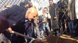 Quand 160 jeunes viennent de l'étranger pour planter des arbres à
