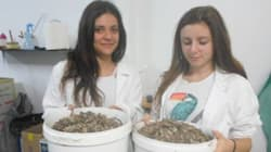 Εντυπωσιακή καινοτομία μαθητών της Πάτρας: Δημιουργούν αντικείμενα από
