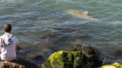 «Προσκύνημα» καρχαριών στα ανοιχτά του Ισραήλ, λόγω θερμών