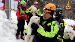 Ιταλία: Τρία κουτάβια βρέθηκαν ζωντανά μέσα στο θαμμένο από χιόνι