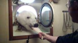북극곰이 과학자들과 애프터눈 티를