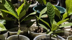 Démarrage du projet des emplois verts à