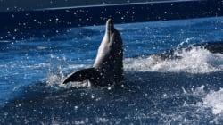 Δεύτερο μωρό δελφίνι σκοτώθηκε από λουόμενους που ήθελαν να βγάλουν selfie στην