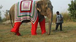 Στο χωριό Mathura της Ινδίας πλέκουν τεράστια πουλόβερ για να προστατεύσουν τους ελέφαντες από το