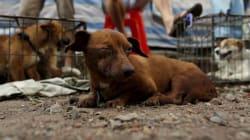 Η κτηνίατρος από την Ταϊβάν που έκανε ευθανασία για έναν πολύ συγκινητικό