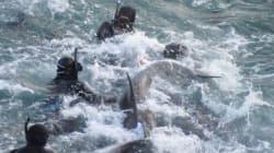 Η δραματική προσπάθεια ενός θηλυκού δελφινιού να σώσει το μικρό της από τα δίχτυα των