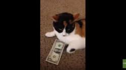 그 누구도 이 고양이에게서 돈을 뺏을 수