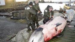 노르웨이 해안에 쓸려온 고래의 뱃속은
