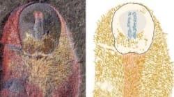 Le fossile de l'ancêtre des mollusques a été découvert au