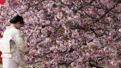 일본 봄꽃 여행지 베스트