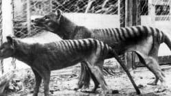 Πέντε είδη ζώων που θεωρούσαμε πως είχαν εξαφανιστεί μέχρι που τα «έπιασε» η