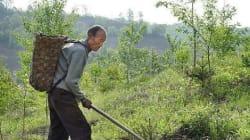 백두산 일대에 30년 동안 나무를 심은