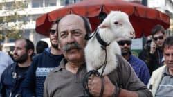 Διαμαρτύρονται οι κτηνοτρόφοι της Θεσσαλίας για την