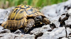 Ο πραγματικός λόγος που οι χελώνες «έμαθαν» να κρύβουν το κεφάλι τους στο