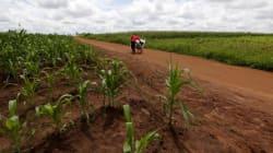La capacité du monde à se nourrir est en péril selon l'ONU