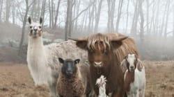 Οι πιο badass φωτογραφίες με ζώα που κυκλοφορούν στο