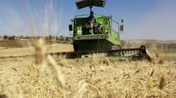 De nouvelles mesures en faveur des agriculteurs: L'UTAP suspend la grève prévue du 4 au 6 mars