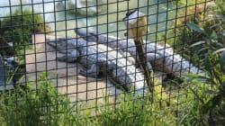 Le Zoo de Tunis provisoirement fermé après la mort d'un
