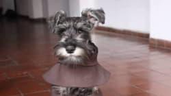 이 사랑스러운 강아지는 수도사가