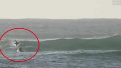 Un dauphin percute violemment ce surfeur (qui n'a pas l'air
