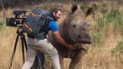 이 코뿔소는 카메라맨에게 뭔가를