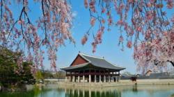 문화재청이 밝힌 4대궁의 봄꽃 개화 예상