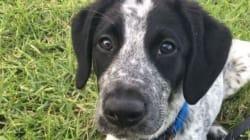 Νέα Ζηλανδία: Αστυνομικοί σκότωσαν εκπαιδευόμενο σκύλο που εμπόδιζε την απογείωση